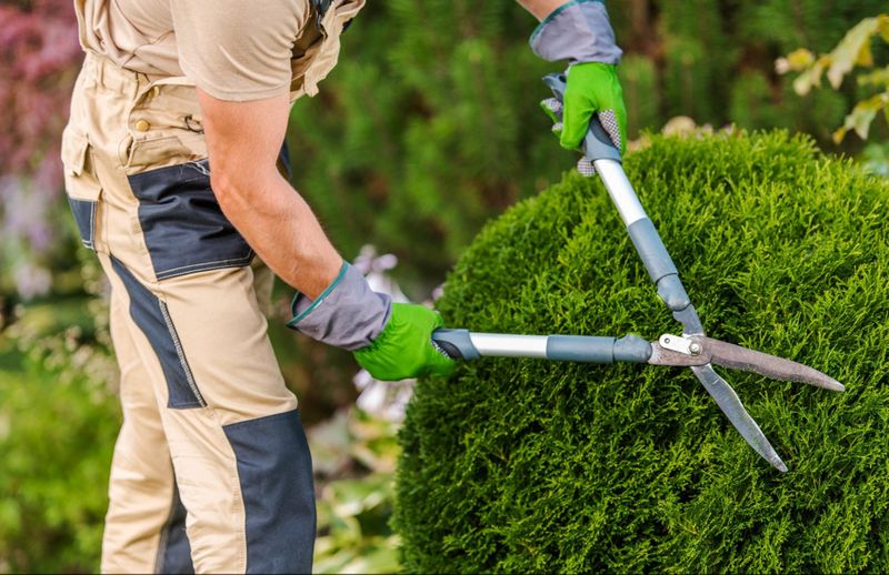 Prune shrubs to keep them healthy and looking great