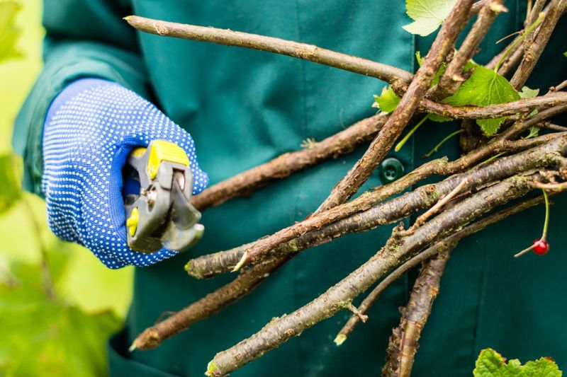 Pruning dead or old cuttings from trees and shrubs