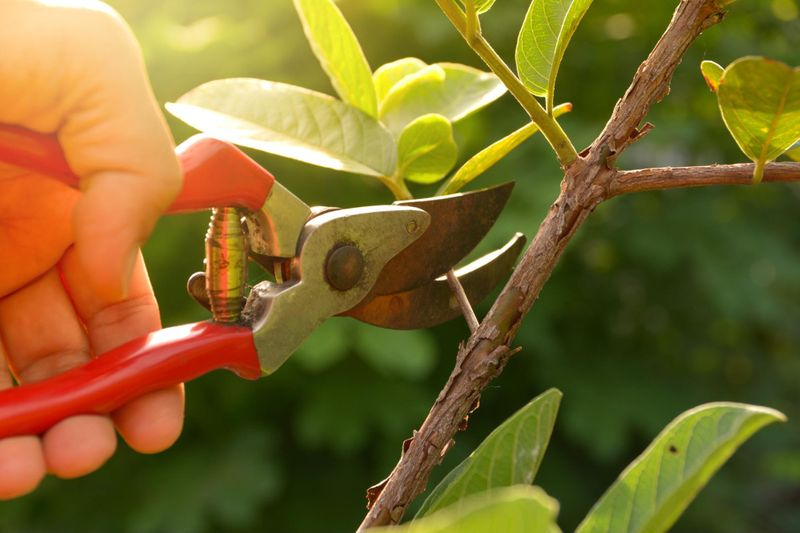 Prune your trees and shrubs in the late winter or early spring
