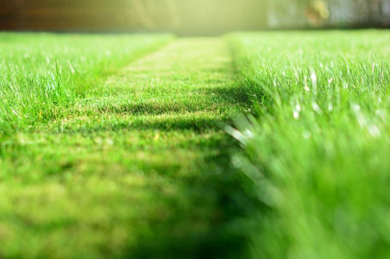 Freshly-cut patch of grass in healthy, green Guelph lawn