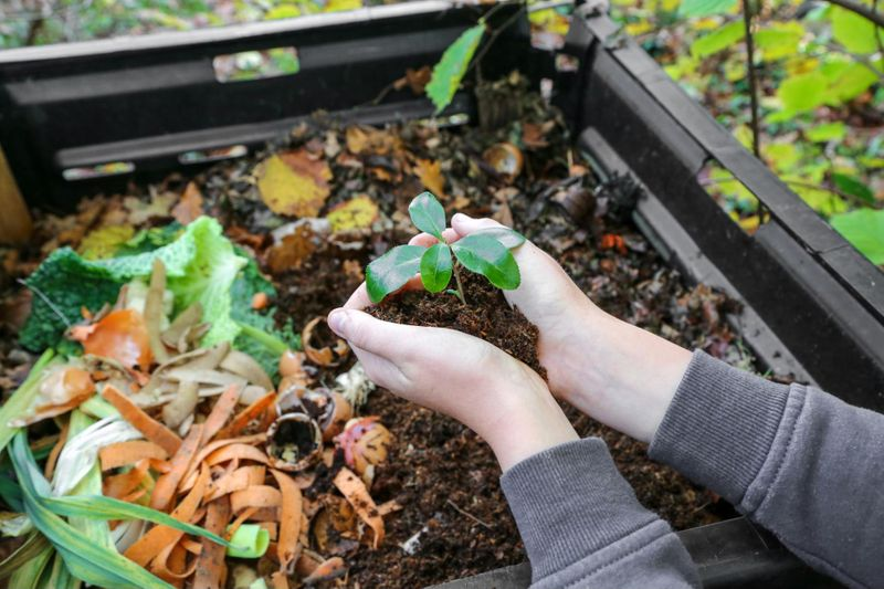 Compost can help your flowers, vegetables, and grass seed thrive all year long.