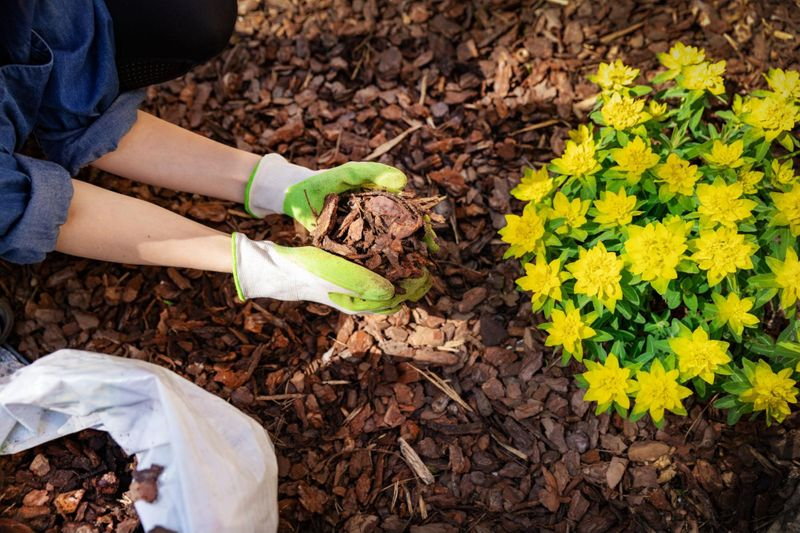 Mulch can be a great addition to your garden as it holds many benefits.